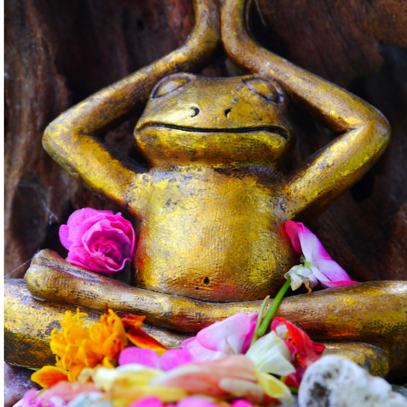 yoga frog with flowers
